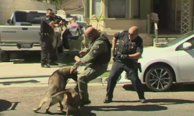 Caught On Video: Police K-9 Attacked By Pit Bull In Anaheim