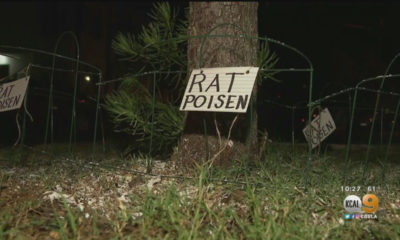 White Powder Marked 'Rat Poison' Found On West Hollywood Street — But Was It?