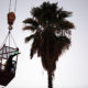 This Pico Rivera cat was stuck in a 90-foot palm tree for nearly two weeks … then he fell