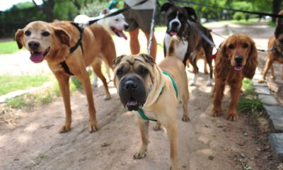 Dog walking company sued over pet's death