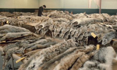 Fur Pelts for Sale in Nevada (source: Library of Congress)