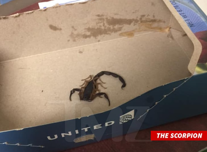 Woman Allegedly Stung by Scorpion on United Airlines Flight